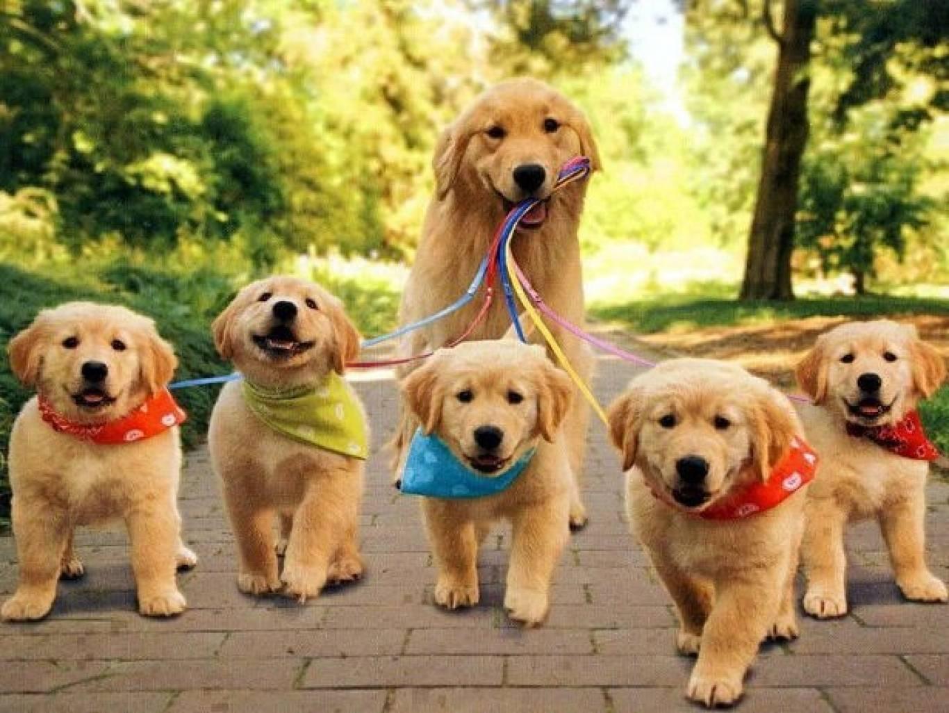 Виставка собак усіх порід