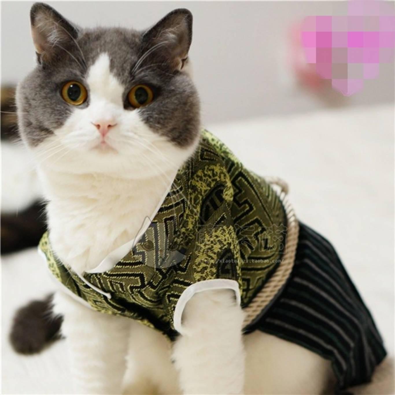 Битва гигантов II. Выставка кошек клуба Royal Feline.