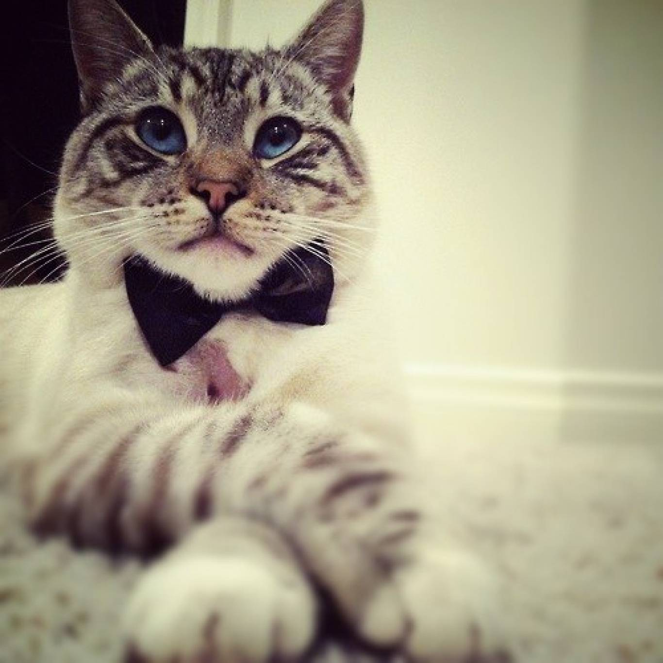 """Выставка кошек """"Мистер Мурр"""""""