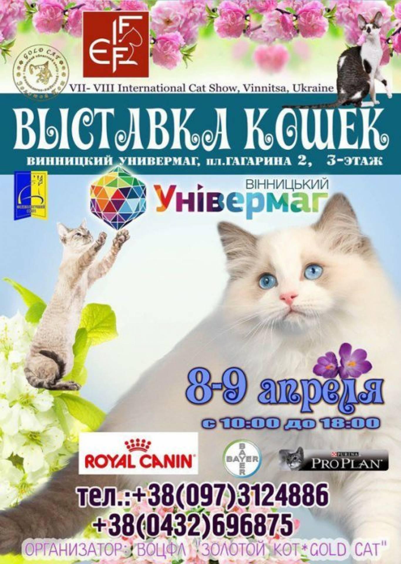 Выставка кошек международная лицензированная FIFe
