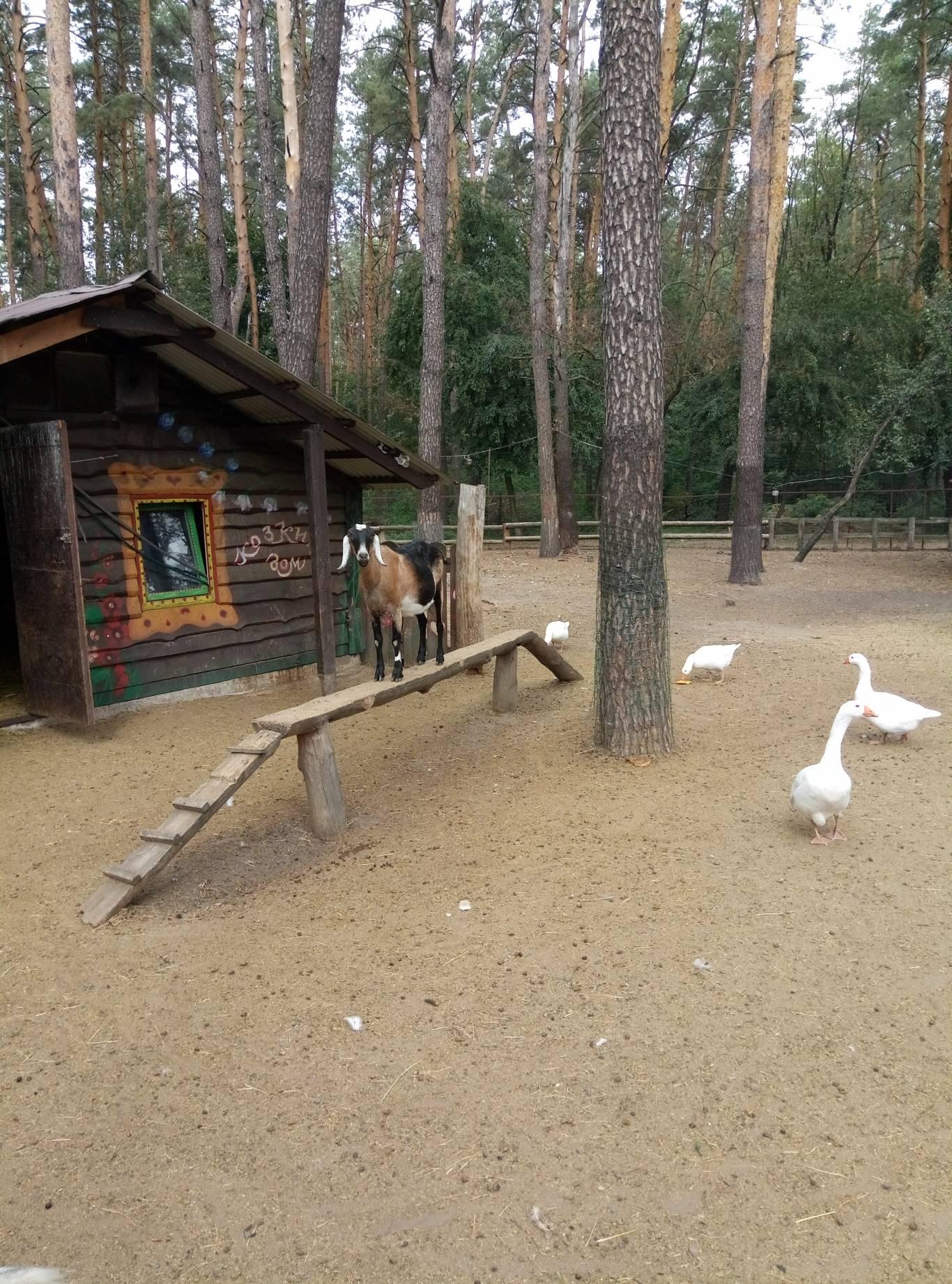 Маленький зоопарк