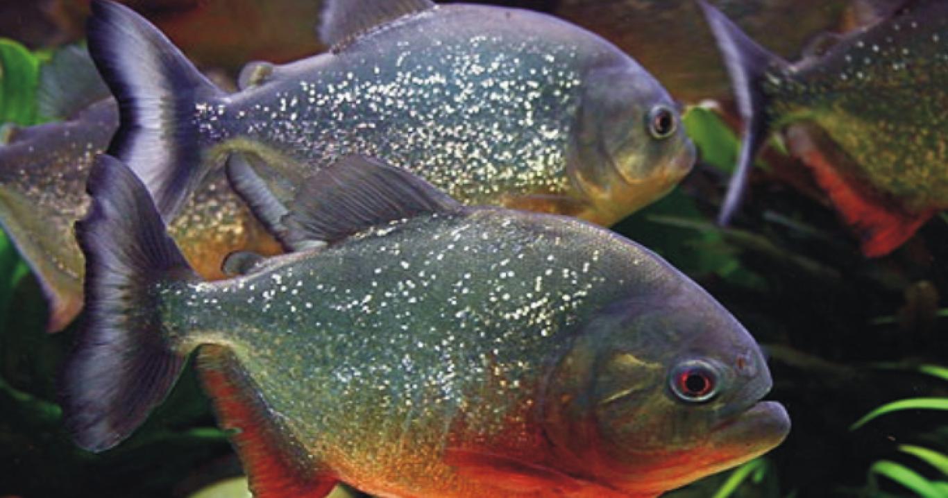 Київська виставка риб