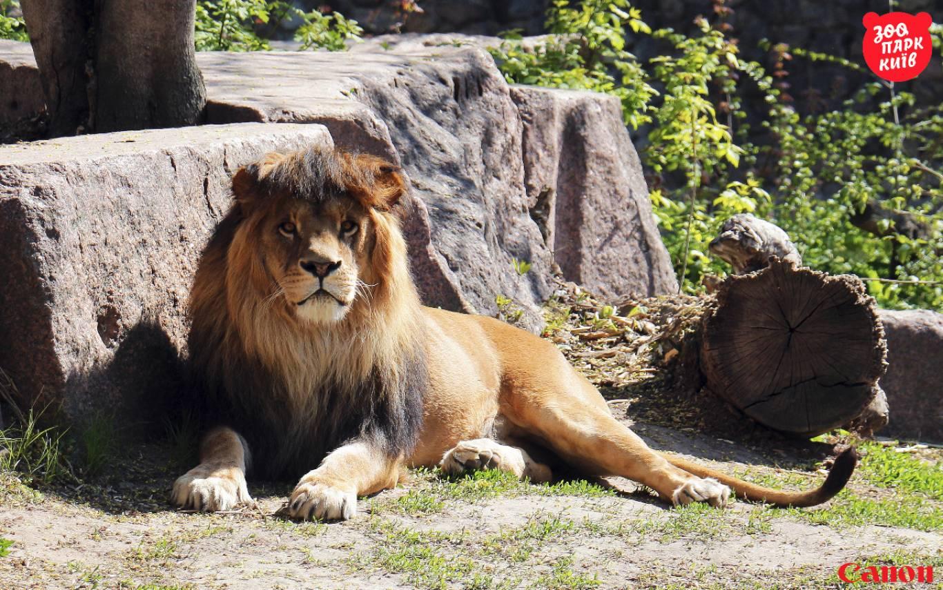 Київський зоопарк (КВИТКИ)