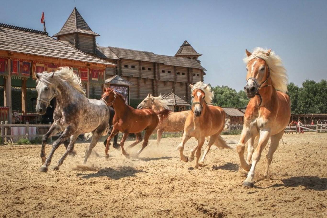 Світ коней - Шоу-показ у Парку Київська Русь