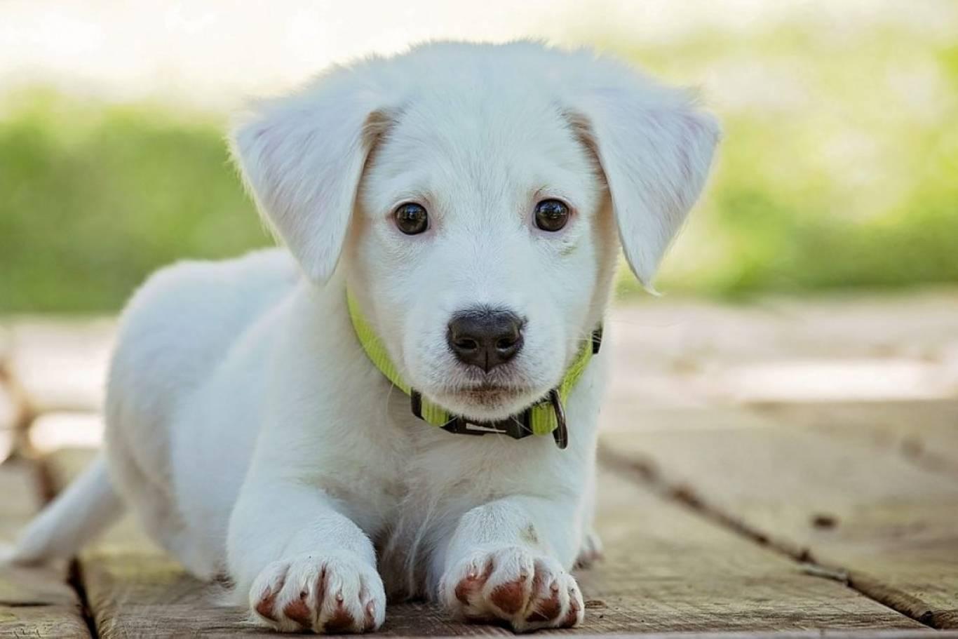 imagen de perro - 1200×630