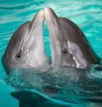 Шоу дельфінів