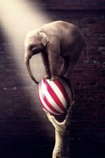 Цирк: прем'єра програми «Арена сміливих»