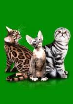 """Міжнародна виставка котів """"Пан Коцький"""""""