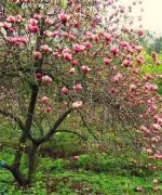 """Екскурсія """"Університетський квартал та квітучий сад магнолій"""" із відвідуванням закритої частини ботсаду"""