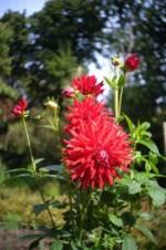 """Ботанічний сад запрошує на виставку """"Осанна осені, осанна"""""""