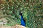 Цікаве дозвілля у Подільському зоопарку