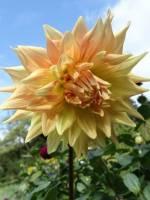 Ботанічний сад запрошує на День відкритих дверей
