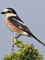 Осінні спостереження за птахами