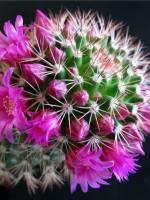 Виставка кактусів та інших сукулентів