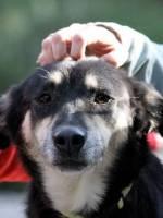 Просто пес - не просто друг - Виставка безпородних собак