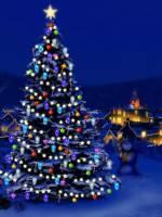 Адреси продажу новорічних ялинок  у Кропивницькому