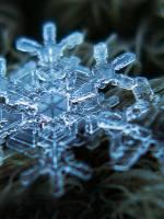 Майстер-клас Кристалізація: чарівне дерево, сніжинка, ялинка
