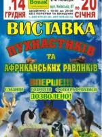 Виставка пухнастиків та африканських равликів в Житомирі