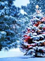 Різдво разом з Копами, патрульною поліцією ТК Буковель