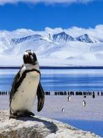 Антарктида: життя серед снігу та криги - Лекція