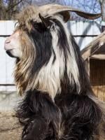 Домівка врятованих тварин у Львові