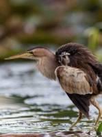 Відкрита лекція зі зйомки птахів