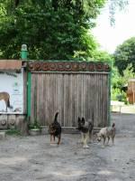 Осінній благодійний ярмарок у Домівці врятованих тварин