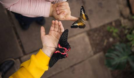 Планета метеликів на ВДНГ